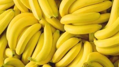 Photo of شبه فقدان لـ«الموز» في الأسواق؟ رغم السماح باستيراد 70 ألف طن