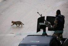 Photo of محنة إدلب: ما خطر التصعيد في سوريا على روسيا وتركيا؟