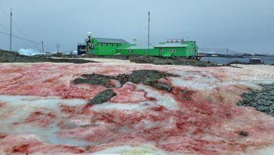 Photo of ثلوج دموية في القطب الجنوبي