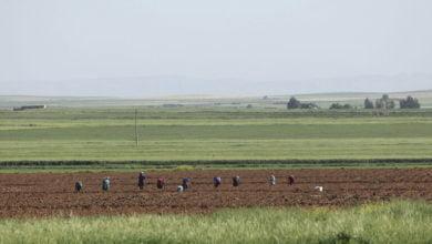 "Photo of من منطقة الغاب.. الحكومة تطلق خطة زراعية ""إسعافية"" لمواجهة العقوبات"