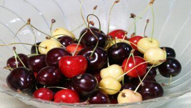Photo of لماذا نجنب الأطفال تناول ثمار الكرز؟