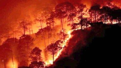 Photo of أسباب ونتائج وتداعيات الحرائق الأخيرة في طرطوس