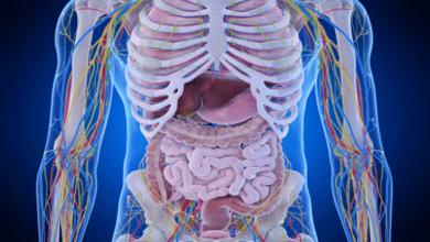 Photo of كم عدد الأعضاء في جسم الإنسان؟